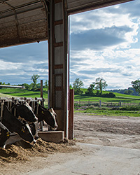 Dairy farming in the US